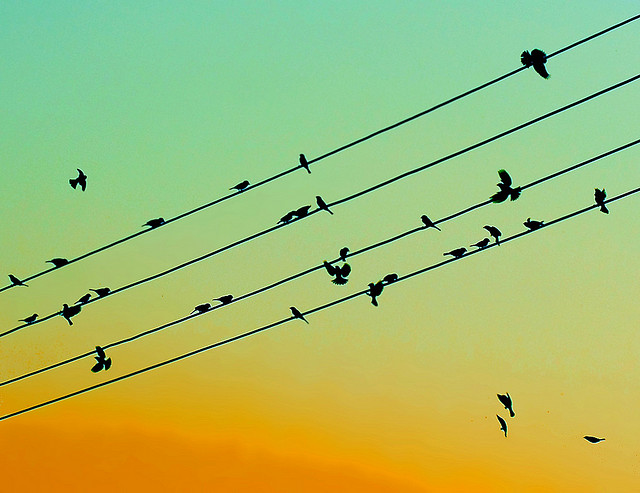 Bird on line